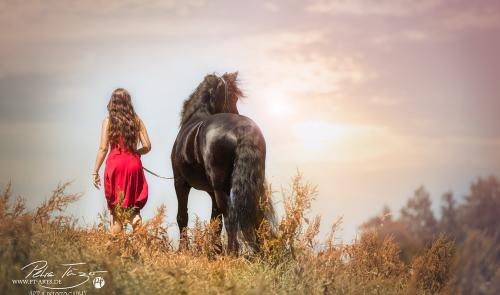 Pony, Pferde ,Pferdefotografie, equine Images, Warmblut, Lusitano, Hengst,Herbst Romantisch schwarzer Hund Mädchen Lusitano Pre braunes Pferd