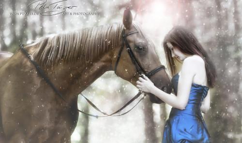 Pferde, Winter,