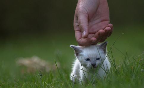 Katzenfotografie