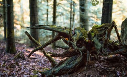 Spaziergang im Schwäbisch -Fränkischen Wald