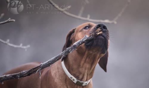 Petra Tänzer Hundefotografie Kenai , der Familienhund
