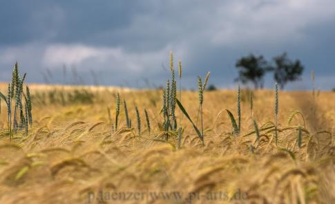 Landschaftsfotografie-Schwäbischer-Wald10