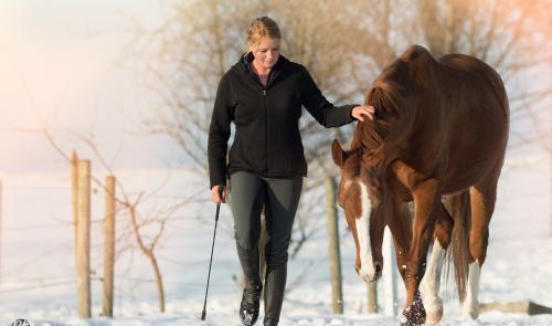 Pony, Pferde ,Pferdefotografie, equine Images, Warmblut, Lusitano, HengstWarmblut#Pferde#Fuchs im Schnee#Romantische Bilder #Pferdefotografie Petra Tänzer