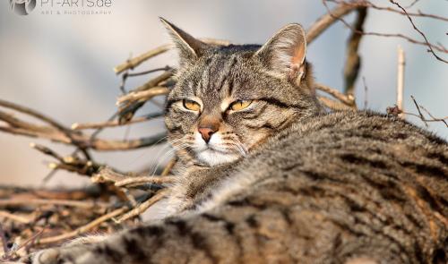 Animals, Wildlife,Tierfotografie, Eichhörnchen, Katzen, Vögel