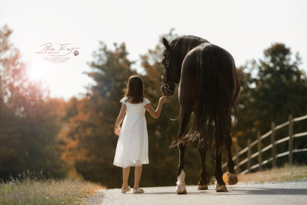 Hubaro Pre-HengstPony, Pferde ,Pferdefotografie, equine Images, Warmblut, Lusitano, Hengst