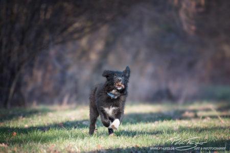 pt-arts-petra-taenzer-fotografie-tierfotografie-hunde-action-frühling 4