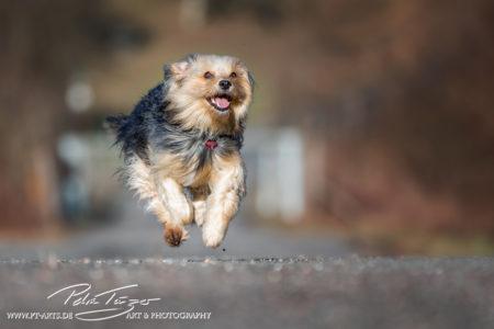 pt-arts-petra-taenzer-fotografie-tierfotografie-hunde-action-frühling 3