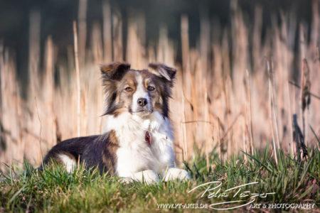 pt-arts-petra-taenzer-fotografie-tierfotografie-hunde-porträt 36