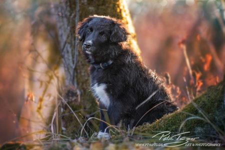 pt-arts-petra-taenzer-fotografie-tierfotografie-hunde-porträt 35