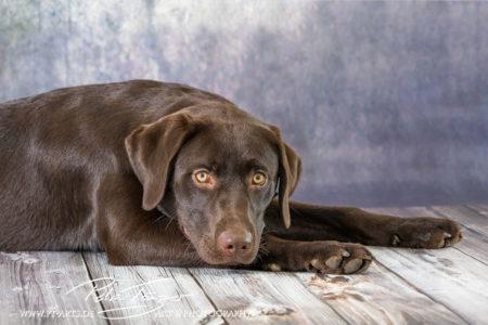 pt-arts-petra-taenzer-fotografie-tierfotografie-hunde-porträt-frühling 18