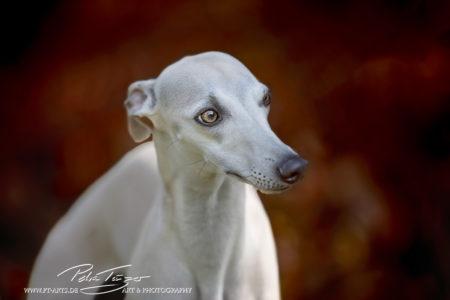 pt-arts-petra-taenzer-fotografie-tierfotografie-hunde-porträt-frühling 21
