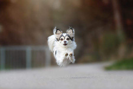pt-arts-petra-taenzer-fotografie-tierfotografie-hunde-action-frühling 13