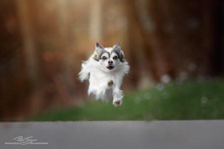pt-arts-petra-taenzer-fotografie-tierfotografie-hunde-action-frühling 14