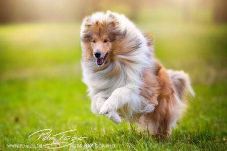 pt-arts-petra-taenzer-fotografie-tierfotografie-hunde-action-frühling 10
