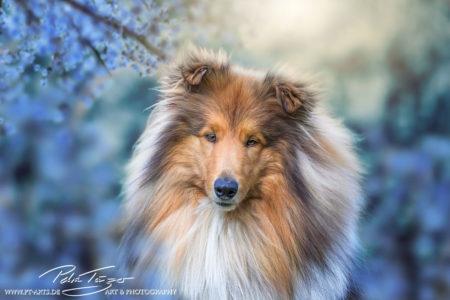 pt-arts-petra-taenzer-fotografie-tierfotografie-hunde-porträt-frühling 11