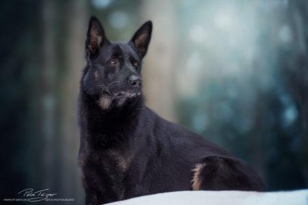 pt-arts-petra-taenzer-fotografie-tierfotografie-hunde-porträt 31