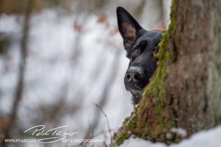 pt-arts-petra-taenzer-fotografie-tierfotografie-hunde-porträt 30