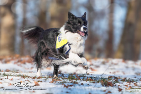 pt-arts-petra-taenzer-fotografie-tierfotografie-hunde-action-frühling 23