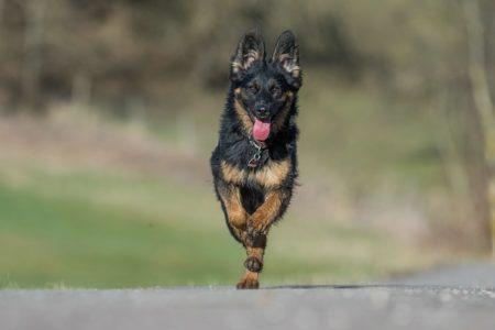 pt-arts-petra-taenzer-fotografie-tierfotografie-hunde-action-frühling 1