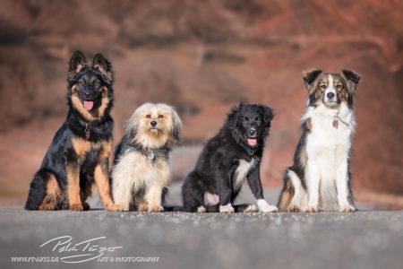 pt-arts-petra-taenzer-fotografie-tierfotografie-hunde-porträt 33