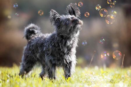pt-arts-petra-taenzer-fotografie-tierfotografie-hunde-porträt-frühling 22
