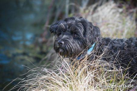 pt-arts-petra-taenzer-fotografie-tierfotografie-hunde-porträt-frühling 2