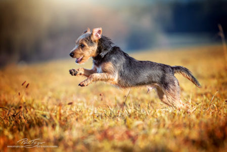pt-arts-petra-taenzer-fotografie-tierfotografie-hunde-action-herbstlook