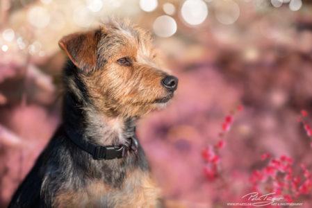 pt-arts-petra-taenzer-fotografie-tierfotografie-hunde-porträt-frühling