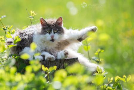 Katzen#Bauernhof#schwarze Hauskatze#Getigerte Katze#Katzenfotografie Petra Tänzer