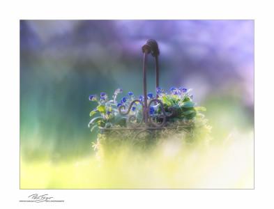 Blumendekorationen, Impressionen