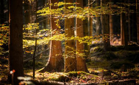 Petra Tänzer Landschaftsfotografie Schwäbischer Wald in Althütte