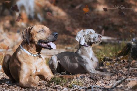 Auswahl-Hunde-30-