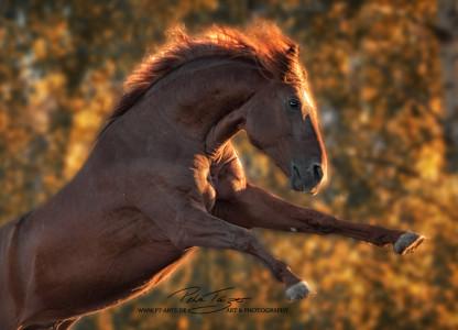 #Pony #Pferde #Pferdefotografie #equine Images, Warmblut, Lusitano, Hengst