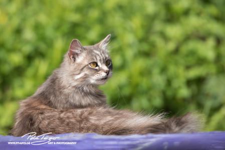 Katzen vom Gnadenhof Zeh