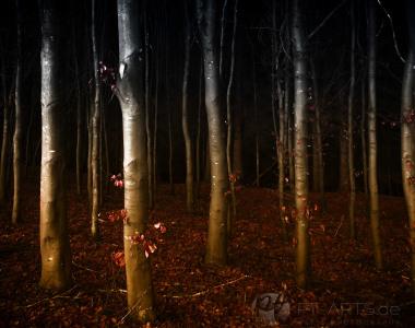 Herbstlicher-Buchenwald-web