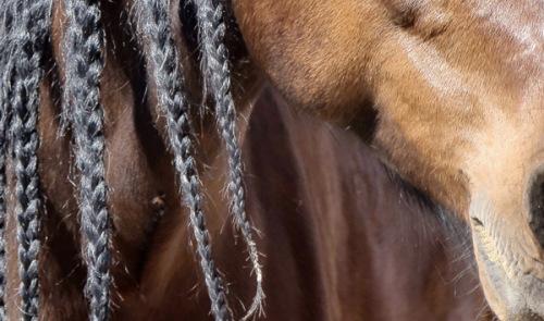 #Tierfotografie#Pferde#Pferde mit Zöpfen#Lusitano#Bildbearbeitung#Pferdefotografie#Petra Tänzer#www.pt-arts.de