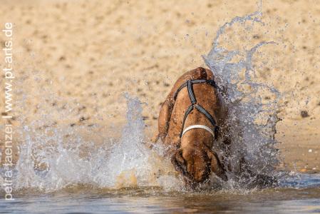 Hundefotografie-Petra-Tänzer-am-Strand-von-St.-Girons-Plage-Atlantik