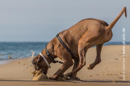 Hundefotografie-Petra-Taenzer-in-Frankreich-am-Atlantik