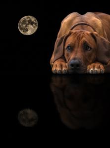 Hundefotografie-RR-im-Spiegel