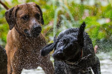 Hundefotografie-Schüttelbild-2