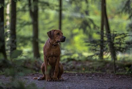 Hundefotografie-Spaziergang-im-Wald