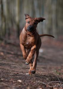 Hundefotografie–Spaziergang-im-Wald