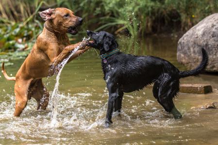 Hundefotografie-Wasserspiele