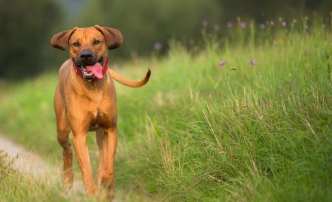 Hundefotografie-mit-Kenai-im-Schwäbischen-Wald-12