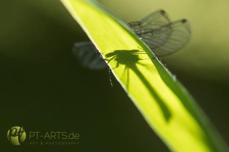 Animals, Wildlife,Tierfotografie, Eichhörnchen, Katzen, Vögel, Makrofotografie#Insekten#Libellen#Schaben#Bienen#Schneckenhaus Fotografie Petra Tänzer