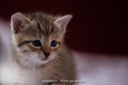 Katzenfotografie-Little-Kitten