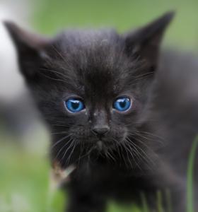 Katzenkinder-auf-der-Wiese-2