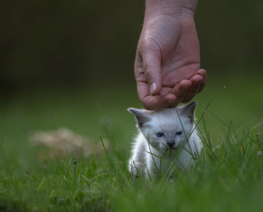 Katzenkinder-auf-der-Wiese-3