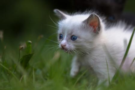 Katzenkinder-auf-der-Wiese