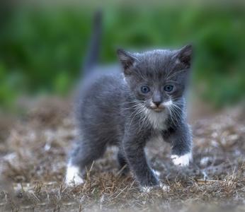 Katzenkinder-auf-der-Wiese-5